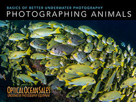 underwater photography of animals