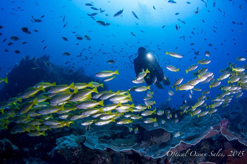 Dive_with_Snapper_School4.jpg